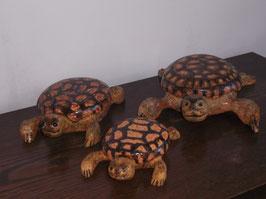 familie schildpad