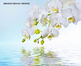 L'ORCHIDEE BLANCHE N°296