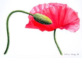Postkarte mit botanischer Zeichnung