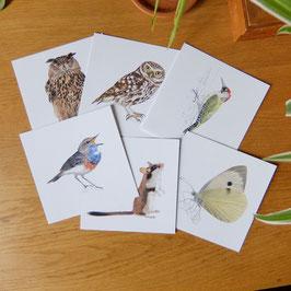 Carte postale dessin naturaliste