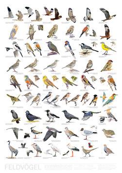 Poster Feldvögel / Farmland Birds