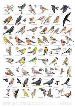 Poster Gartenvögel / Garden Birds