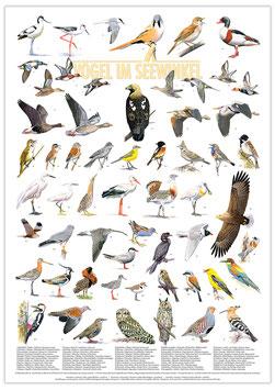 Poster Vögel im Seewinkel
