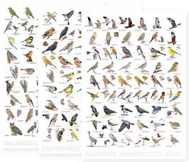 Vogelposter 3er Set