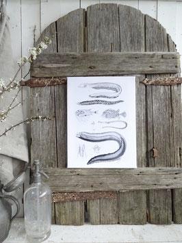Leinwanddruck 30x40 cm FISCHE I