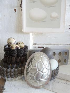 10cm uralte belg EI-Schokoladenform Schildkrötpanzer