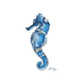 Hedgehog seahorse (Hippocampus spinosissimus)