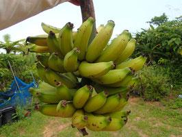 早取り スーパーミニバナナ (10本)約600g