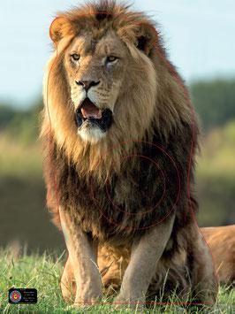 3-031-16 LION