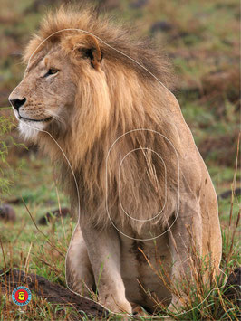 3-017-10 LION