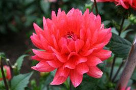 Claudias Herbsttraum (Espee)