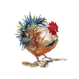 Animal de la ferme, le coq