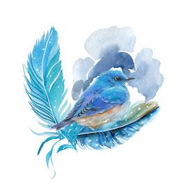 plumes et oiseau bleu