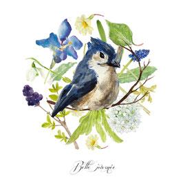 Oiseau Geai bleu