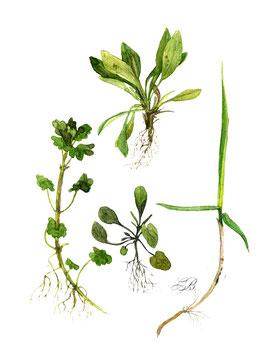 planche plantes