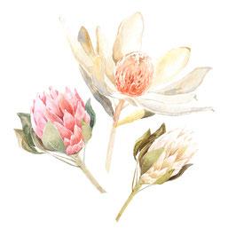 Rose exotique
