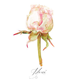 Bouton de roses merci