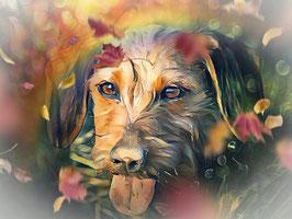 Hunde  DACKEL 5- Hunde Kunstdruck -Hochwertiger Kunstdruck auf Leinwand  Animal Print