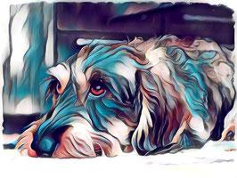 Hunde  DACKEL 4- Hunde Kunstdruck -Hochwertiger Kunstdruck auf Leinwand  Animal Print