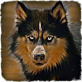 Hunde HUSKY 3 -Kunstdruck Husky - Kunstdruck -Hochwertiger Kunstdruck auf Leinwand