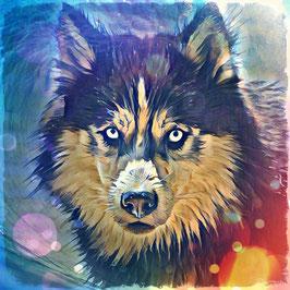 Hunde HUSKY 1 -Kunstdruck Husky - Kunstdruck -Hochwertiger Kunstdruck auf Leinwand