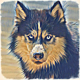 Hunde HUSKY  2 -Kunstdruck Husky - Kunstdruck -Hochwertiger Kunstdruck auf Leinwand