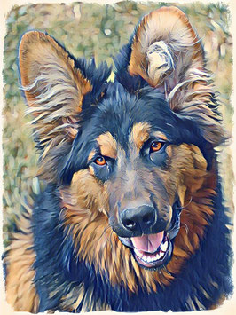 Hunde SCHÄFER 1- Hunde Kunstdruck -Hochwertiger Kunstdruck auf Leinwand  Animal Print