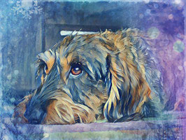 Hunde  DACKEL 3- Hunde Kunstdruck -Hochwertiger Kunstdruck auf Leinwand  Animal Print