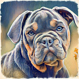 Hunde BULLI 2 -Kunstdruck Bulldogge - Kunstdruck -Hochwertiger Kunstdruck auf Leinwand