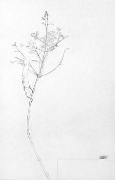 Paco Lagares. Serie Insecto y rama