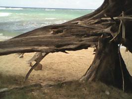 bark of tree- Mokuiea Oahun aluminum 3d/medal/buyer bid auction