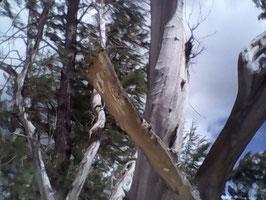 Tree's aluminum 4d/medal  sizes varies/ auction buyer bid