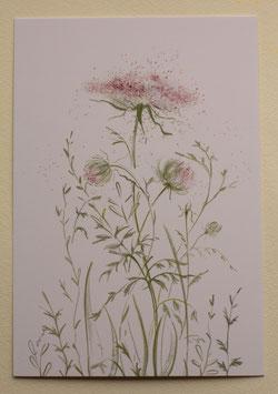 Postkarte - Wilde Möhre