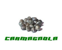 "CBD Hanfsamen ""Carmagnola"""