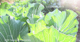 りびえ旬野菜セット
