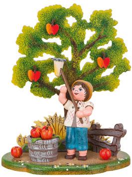 Landidyll- Apfelernte