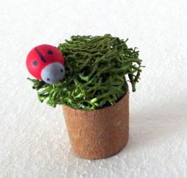 Blumentopf mit Marienkäfer