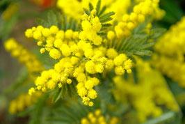 Wild Mimosas Parfum