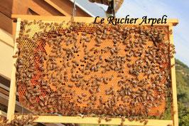 Réservation essaims d'abeilles sélectionnées Frère Adam Buckfast sur 5 cadres Dadant pour 2020.