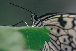 Schmetterling  /  883