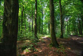 Wald   /  950