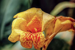 Gelbe Blüte   /     122