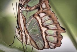 Schmetterling  /  882