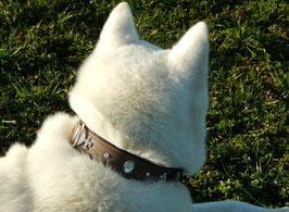 City Chic für Ihren Hund mit einem superweichen, stylischen Halsband in Leder mit Strass und Fleur de Lilly in braun plus passende Leine