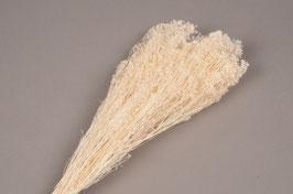 Broom Bloom Préservé Blanc