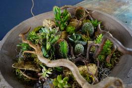Piante grasse miste - piante da interno