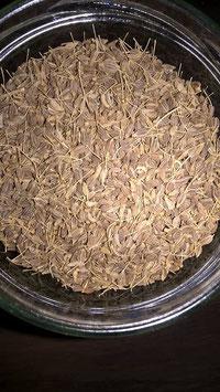Cumin Fruit poudre