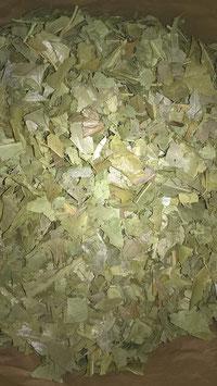 Houx feuilles