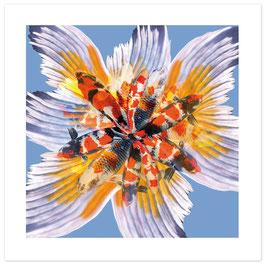 """KOI KOI KOI"" - Pattern of Earth, Fine Art Print, 50x50 cm (Außenmaß), Limitierte Sonderedition"