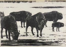 Bergmann Paul, «Bisons»
